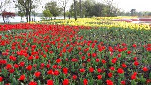 上海辰山植物園の花畑